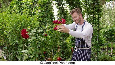 Male gardener cutting flowers - Handsome man doing...