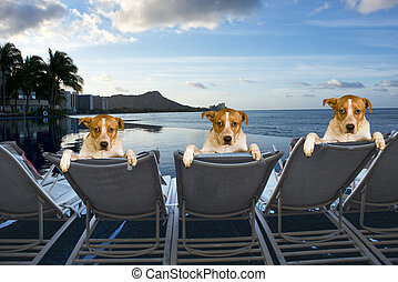 Dogs on Vacation. - Three family dogs on vacation in Hawaii.