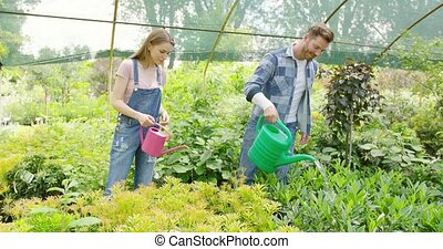 Gardeners watering plants - Young man and woman taking care...