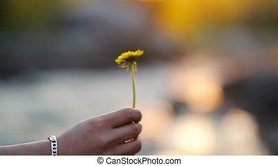 Male hand giving a flower to a female hand, concept of Love, slow motion