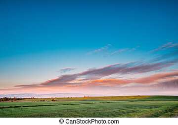 Green Wheat In Spring Field Under Scenic Summer Colorful Sky...