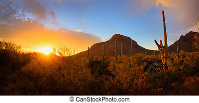 Saguaro and Mountain Sunset Panorama