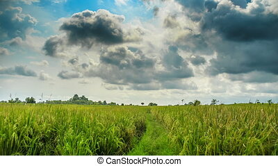 Rice field before rain time lapse