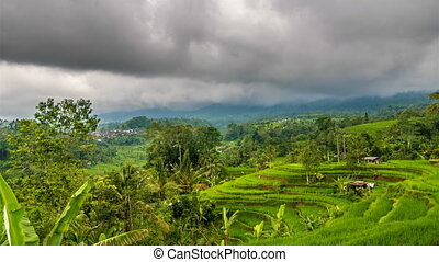 Rice terrace and moody clouds time lapse