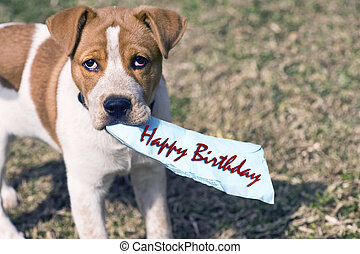 Have a Happy Birthday. - Happy birthday from little puppy.