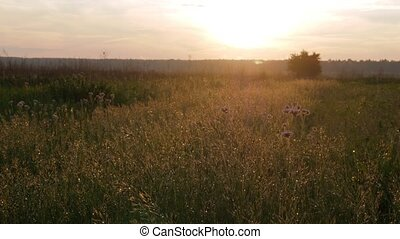 Field of plants at sunset. Moving camera. Beautiful sky.