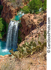 Prickly Pear Cactus in Overlooking Havasu Falls - Shot of...