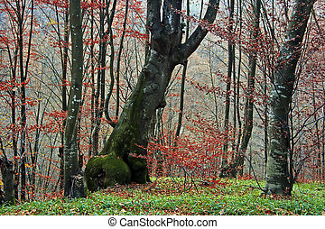 Autumn in forest 7 - Somewhere in the forests of Jgheabu,...