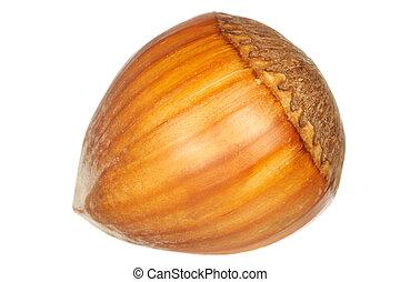 Hazel nut Isolated over white background