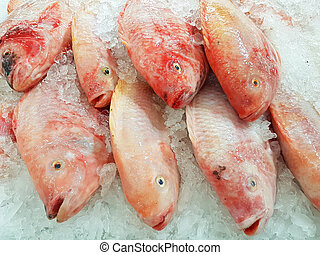 red Nile tilapia on ice background on supermarket in...