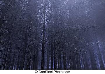 Pine woods at night