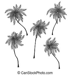 Set of stylized palm trees silhouettes