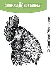 chicken breeding. animal husbandry. livestock. vector sketch...