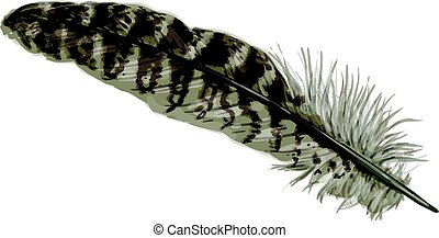 Pheasant feather - Vector illustration - beige pheasant...