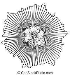Isolated flower sketch