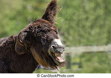 Dumb animal. Stupid looking jackass. Hairy laughing donkey...