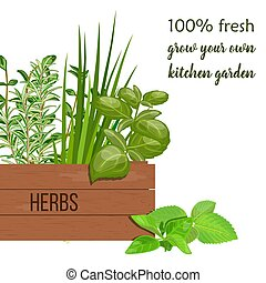 Wooden crate of farm fresh cooking herbs in wooden box....
