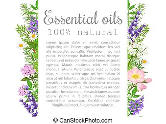 Popular essential oil plants label set. badge with text....