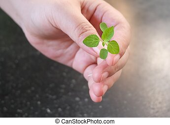 Hand Holding A Green Small Young Plant