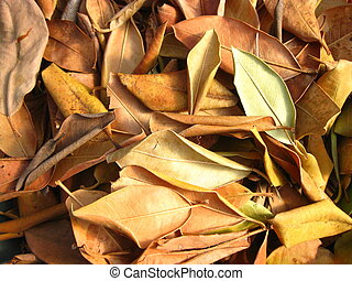 Arbutus leaves in a pile