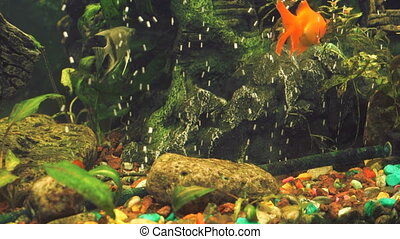 Green freshwater aquarium with small fishes