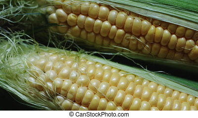 Cob of young corn wrapped in green leaves. - Ripe ear of...