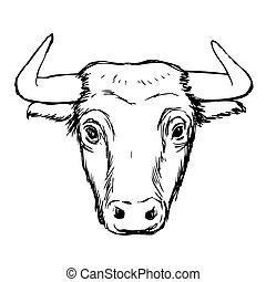 freehand sketch illustration of bull,  doodle hand drawn
