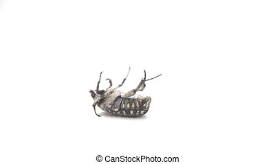 Insect is lying on his back - The insect is lying on his...