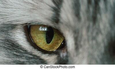 Cat eyes macro - Macro video of cat's green eye. Gray cat...