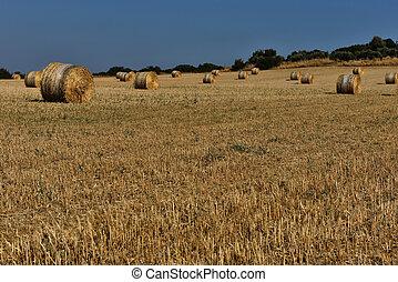 Straw bales on farmland with blue sky - Straw bales,...