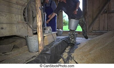 Men carry buckets with grain. Agriculture grain sifting...