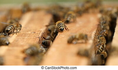 Macro shot of bees working inside of a beehive on a wooden surface