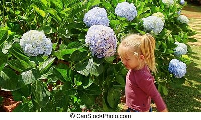 Little Girl Hugs Blue Hydrangea Flowers Smell in Park -...