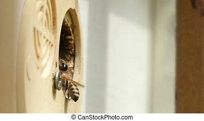 Macro shot of bees crawling inside the hive hole and bringing honey in summer