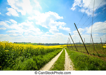 Fields of Bavaria - A pathway leading through the yellow...