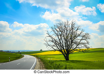 Fields of Bavaria - A road passing next to an isolated tree...