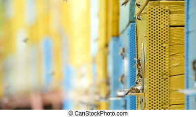 Bees with honey at their hives on an apiary in Ukraine in a sunny day in summer