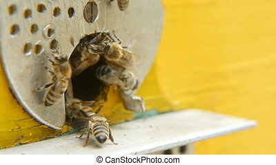 Macro shot of bees entering the hive hole from a metal rack with honey in summer