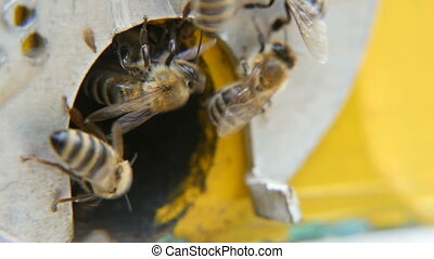 Macro shot of bees coming into the hive hole from a metal rack with honey