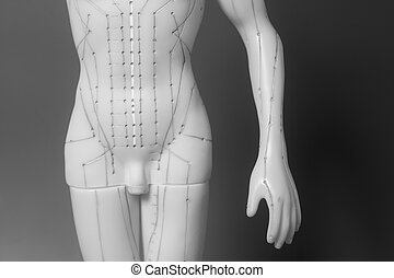 Medical acupuncture model of human on black background