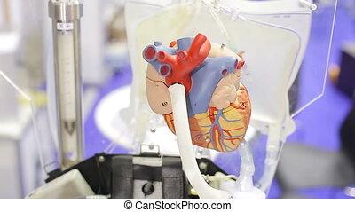 Artificial heart as a showpiece_1