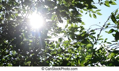 Twinkling sunshine with sun rays coming through foliage -...
