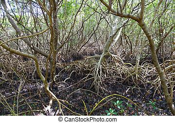 Everglade - Trees of the everglade.