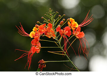 Tropical Flower - Sanjay Ghandi NP Mumbai, India - Sanjay...