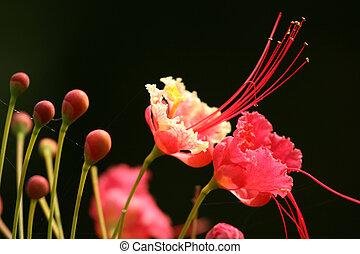 Tropical Flower - Sanjay Ghandi N.P. Mumbai, India - Sanjay...