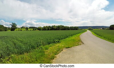 Road between two wheat fields - Road between two fields with...