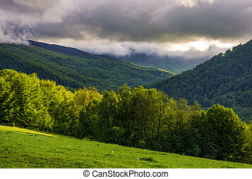 forest on hillside at cloudy sunrise in mountains - forest...