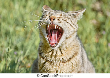 Yawning Stray Cat on the Green Grass