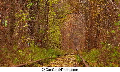 Abandoned Railway under Autumn Colored Trees.