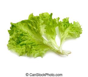 leaf fresh lettuce on white